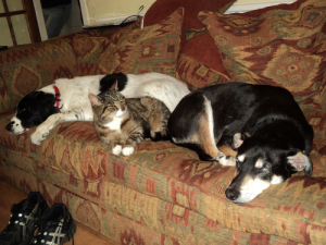 Sleeping pets
